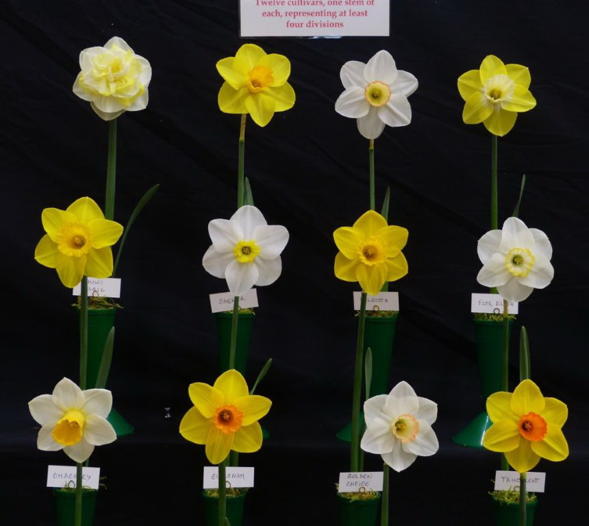 S E E D S Show 2018 The Daffodil Society